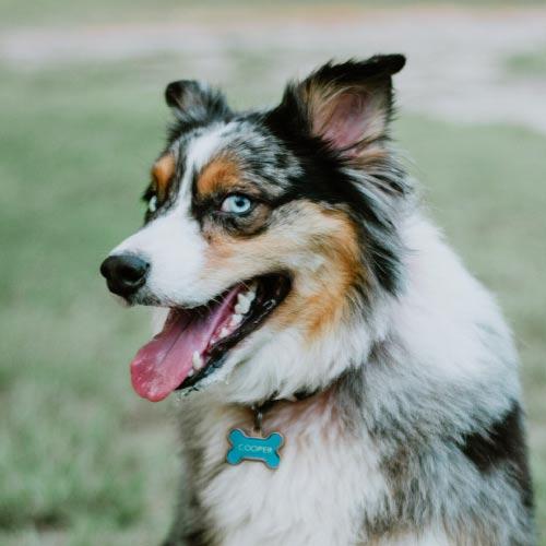 Dog Cooper