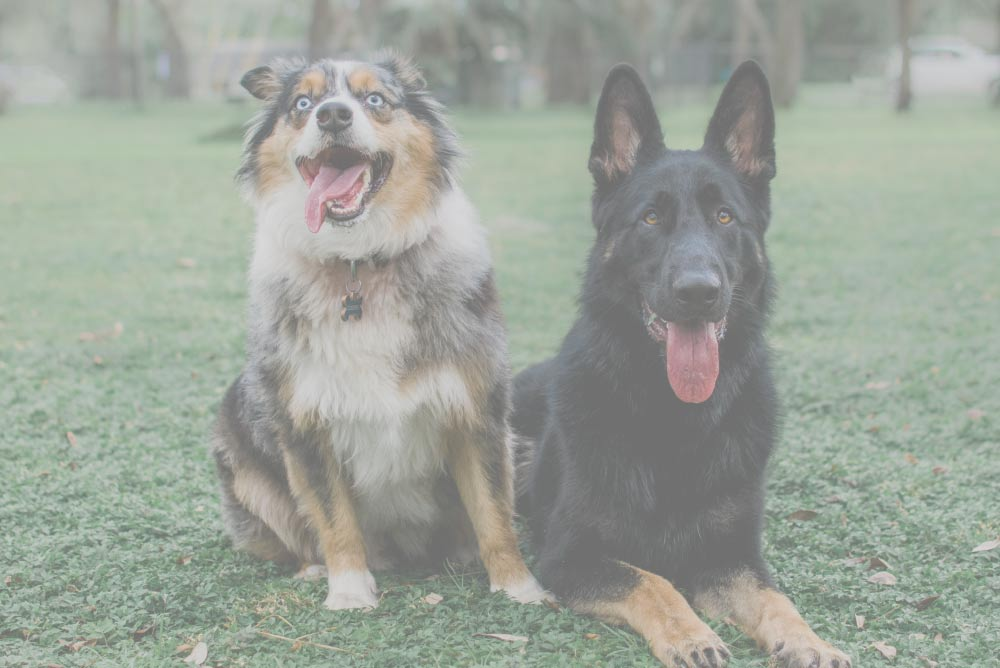 Two Dogs Header